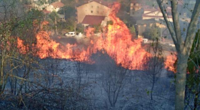 Ağaçlık alan alev alev yandı