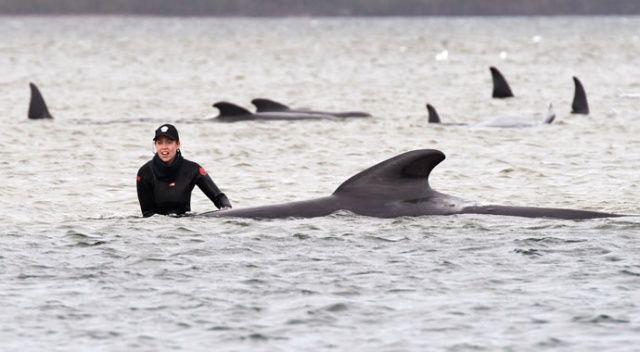 Avustralya'da 200 balina daha karaya oturdu