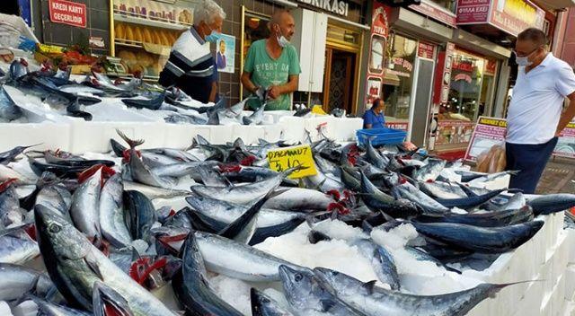 Balık pazarında palamut bolluğu: Tanesi 10 liraya düştü