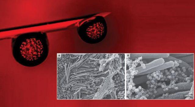 Çarpıcı koronavirüs araştırması! Elektron mikroskobuyla görüntülendi