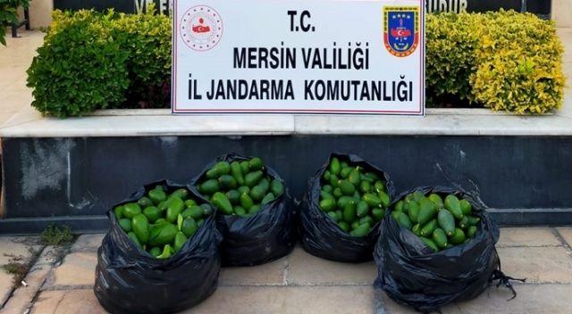 Hırsızlık şüphelisi çaldığı 120 kilo avokado ile yakalandı