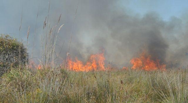 Kızılırmak Deltası'nda yangın devam ediyor