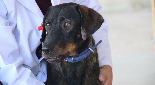 Yaralı rolündeki oyuncuya sarılan köpeği belediye kaptı
