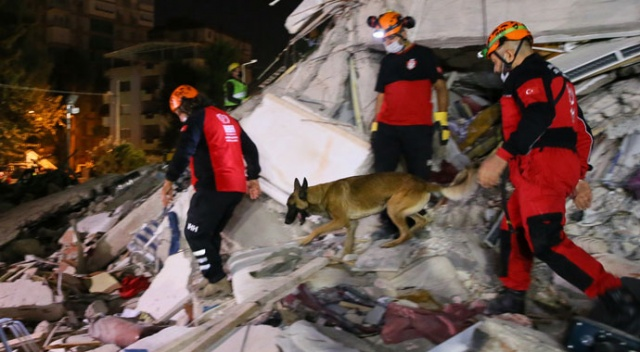 Arama kurtarma ekiplerinin sağ kolu: Hayat kurtaran köpekler