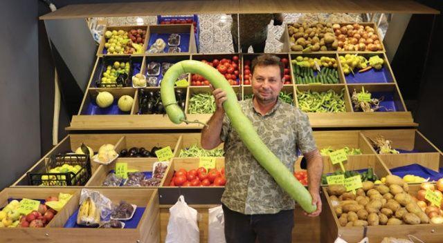 Dev kabak görenleri şaşırtıyor: Tam 1 metre 38 santimetre