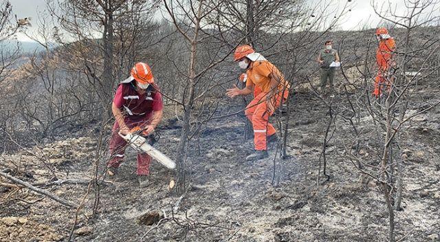 Hatay'da yanan ormanlık alana fidan dikmeyin uyarısı