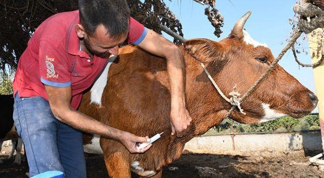Mersin'de hayvanları telef eden korkunç hastalık!