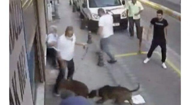 Yer: İstanbul! Kavgaya köpekler de karıştı