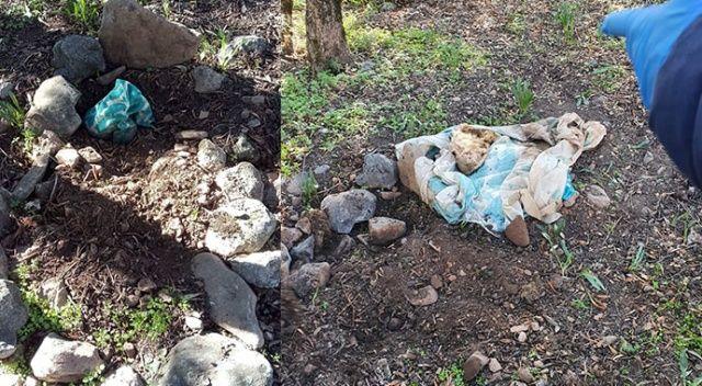 Bebek gömüldüğü sanılan mezarlıktan, köpek cesedi çıktı