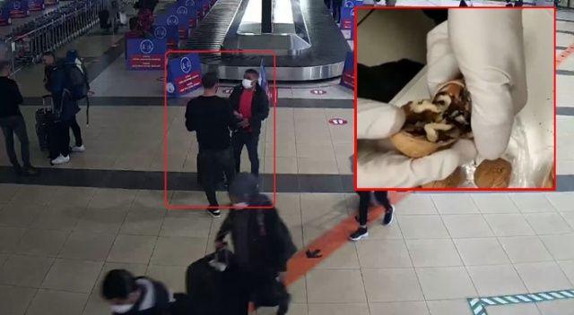 Havalimanında çantadaki cevizin içinden uyuşturucu çıktı