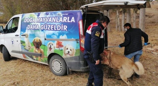 Yozgat'ta bahisle köpek dövüştüren 8 kişi gözaltına alındı