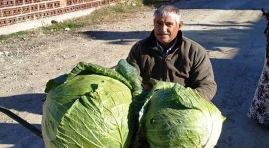 Keçi gübresiyle yetiştirilen devasa karpuz ve lahanalar şaşırttı
