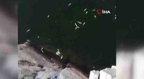 Nallıhan'da toplu balık ölümleri dikkat çekti