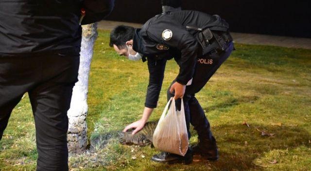 İzmir polisinden örnek davranış: Aç kalan hayvanları elleriyle besledi