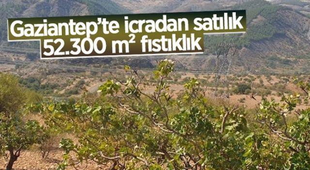 Gaziantep'te icradan satılık fıstıklık