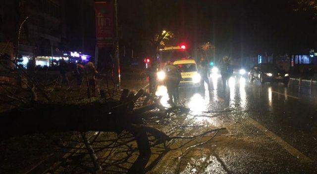 Şiddetli rüzga Bağdat Caddesi'nde ağaç devirdi