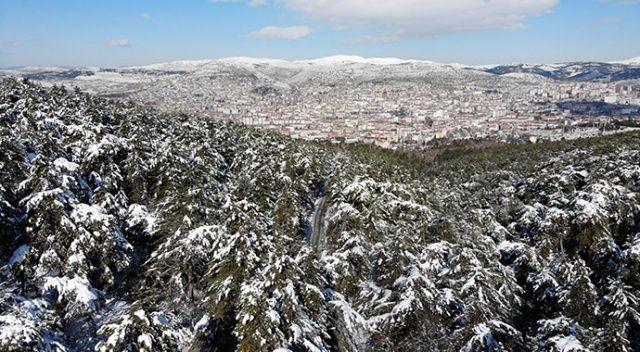 Türkiye'nin ilk milli parkı: Yozgat Çamlığı Milli Parkı