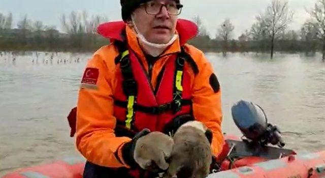 Yavru köpekleri taşkından AFAD kurtardı