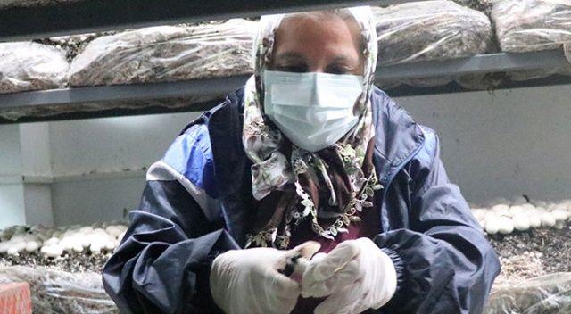 65 yaşında mantar yetiştiricisi oldu: Bu iş sayesinde moralim düzeldi