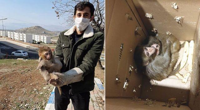 Şırnak'ta yasa dışı yollardan yurda sokulan 4 örümcek maymunu ele geçirildi