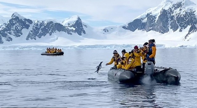 Penguen katil balinadan kaçtı, insanlara sığındı