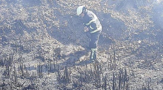 Manisa'da 10 yavru köpek yangında telef oldu