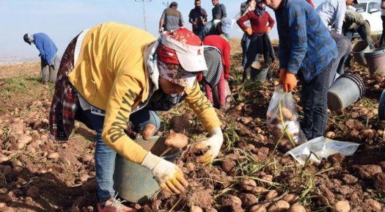 Tarım ve hayvancılık sektörü 2020 yılında Bitlis'e 3 milyar TL kazandırdı