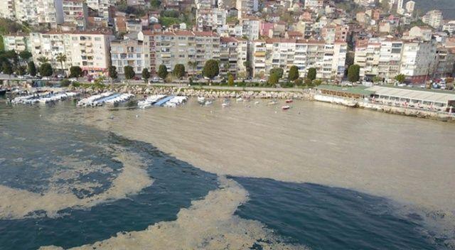 Bursa'da, plankton çoğalması deniz suyu kahverengiye dönüştürdü