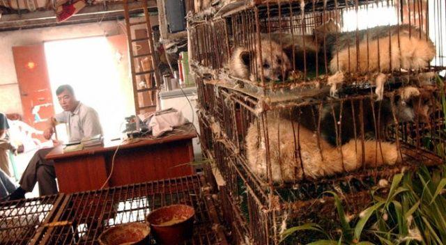DSÖ, pazarlarda vahşi hayvan satışının durdurulması çağrısı yaptı