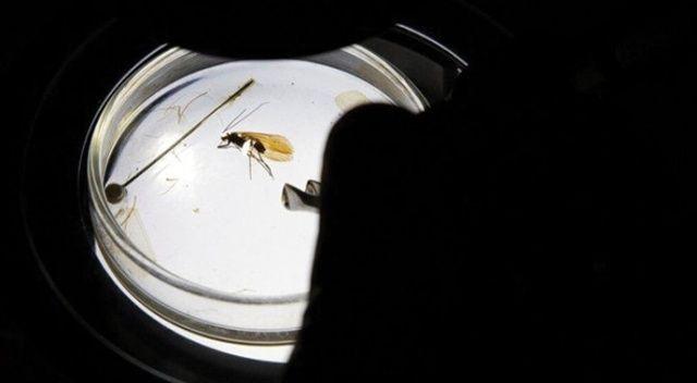 Kosova'da keşfedilen yeni böcek türüne koronavirüs adı verildi