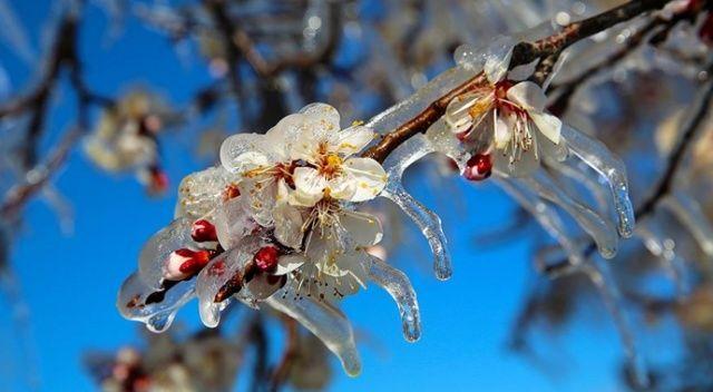 Meteorolojiden zirai don uyarısı, üreticiler 13 Nisan'a kadar dikkat