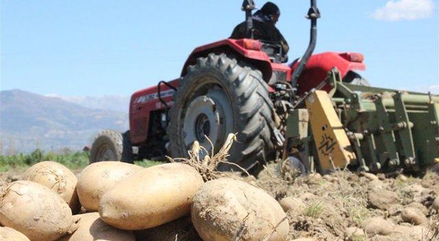 Ödemişli patates üreticileri, yarın başlayacak TMO alımına hazırlanıyor