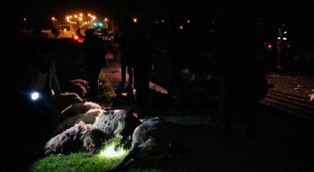 Otomobil sürüye daldı, 29 hayvan telef oldu
