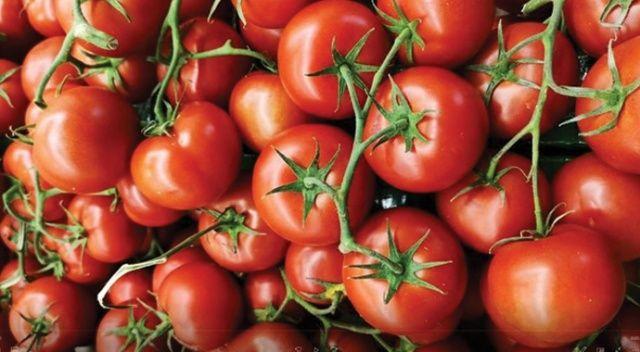 Ruslar Türk domatesinden vazgeçemiyor
