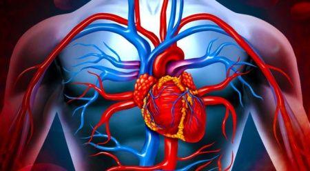 Kalp ve damar hastalıklarından korunmak mümkün