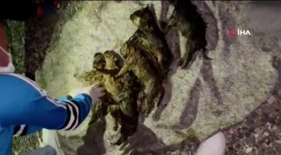 Ankara'da fosseptik çukuruna atıldığı iddia edilen 6 yavru köpek kurtarıldı