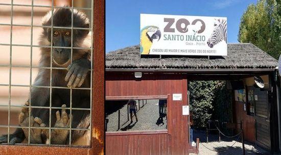 Hayvanat bahçesinde maymun, çocuğun parmağını kopardı