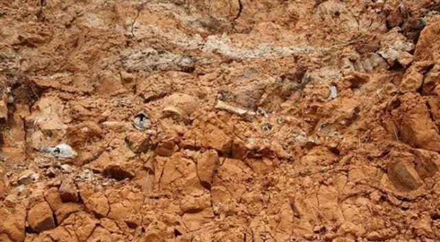 1 milyar yıllık fosil keşfedildi: En eski çok hücreli canlı olabilir