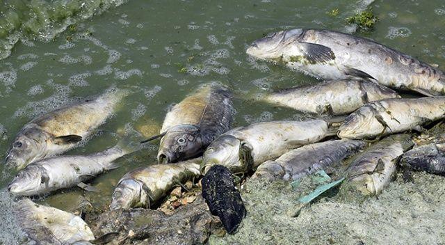 Adana'da toplu balık ölümleri