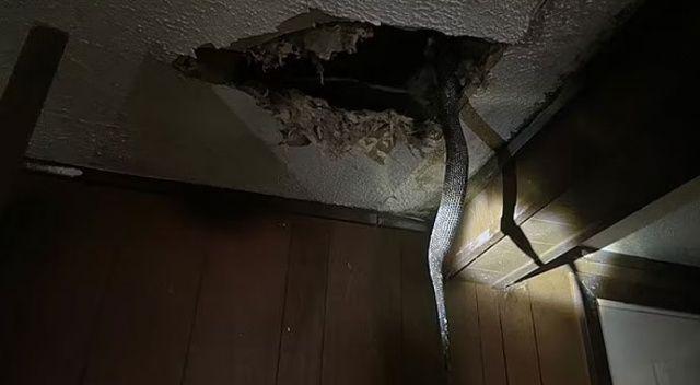 Amerikalı aile şokta: Yaşadıkları evin tavanı yılanlarla dolu