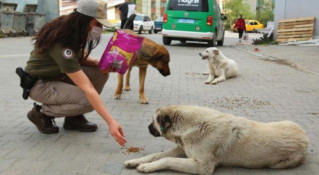 """Artvin'de """"tam kapanma"""" sürecinde sokak hayvanlarına polis ekiplerinden şefkat eli"""