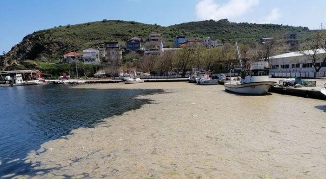 Deniz salyası canlıları yok ediyor