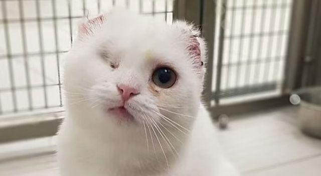 Güneşten yanan kedinin iki kulağı ve bir gözü ameliyatla alındı