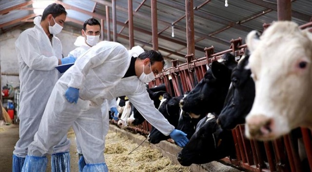Koronavirüs hayvanlarda da tespit edilmişti, yetkili isim açıklama yaptı