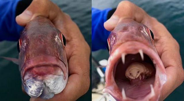 Parazit, balığın diline yerleşti