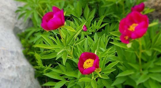 Bu çiçeği koparmanın cezası 80 bin lira!