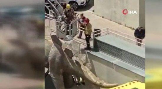 Dinozor heykelinin içinden ceset çıktı