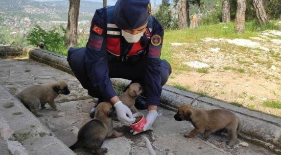 Jandarma 'tam kapanma' sürecinde sokak hayvanlarını unutmadı