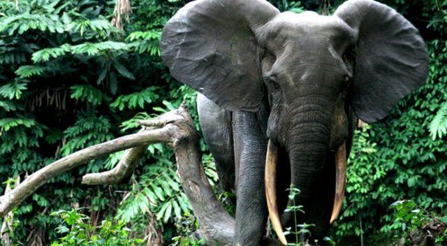 Hindistan'da 28 filin koronavirüs testi pozitif çıktı