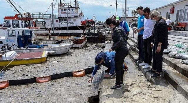 İstanbul Üniversitesi, müsilajı temizlemek için deniz bakterilerini kullanacak
